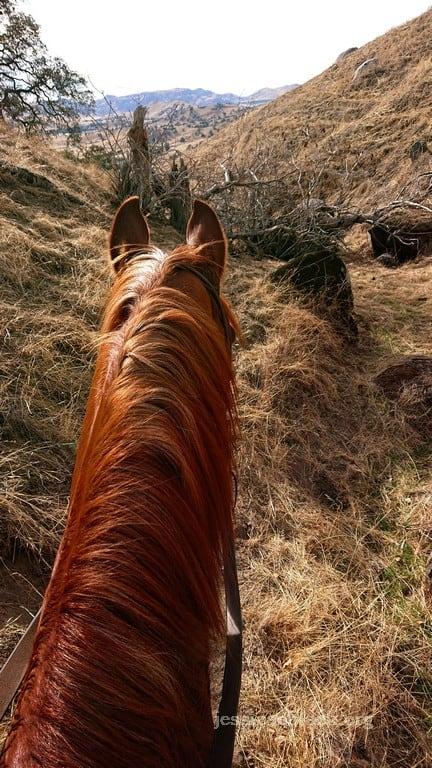 trail horse abilities